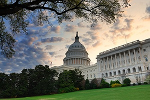 Why Isn't Political Turmoil Shaking the Market?